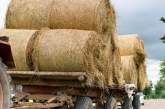 El tractor transporta el heno torcido de la gavilla, rollos de la paja en el remolque de la máquina agrícola Imágenes de archivo libres de regalías