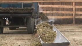 El tractor va alrededor del forraje en la granja para el ganado metrajes