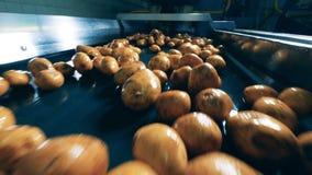 El transportador de la fábrica está transportando las patatas frescas metrajes