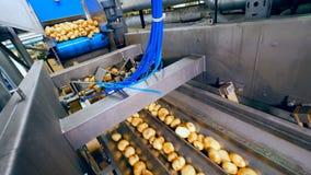 El transportador del metal con el conducto está volviendo a poner las patatas almacen de video