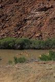 El transportar en balsa abajo del río Colorado Imágenes de archivo libres de regalías