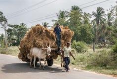 El transporte del carro del búfalo es lleno Foto de archivo libre de regalías