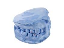El tratamiento previó aislado echó el modelo para los dientes estudia en el backg blanco imágenes de archivo libres de regalías