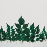 El treeline decorativo del bosque hecho de verde se va en backgr brillante Fotos de archivo libres de regalías