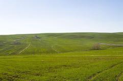 El trigo cultivó las tierras de labrantío, trigo que germinaba con venir de la primavera Fotografía de archivo libre de regalías