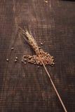 El trigo en la madera imágenes de archivo libres de regalías