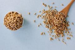 El trigo orgánico fresco brota en una cuchara de madera en una superficie azul Fotografía de archivo libre de regalías