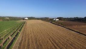 El trigo y el vino coloca en el campo de Portugal metrajes