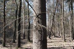 El tronco comió Foto de archivo