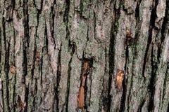 El tronco de árbol Fotografía de archivo libre de regalías