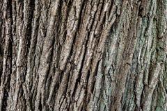 El tronco de árbol Imagen de archivo libre de regalías