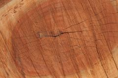 El tronco de árbol aserrado texturizó el fondo fotos de archivo