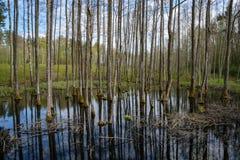 el tronco de árbol texturizó el modelo del fondo en la charca de agua Imagen de archivo