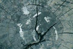 El tronco de árbol viejo Imágenes de archivo libres de regalías
