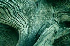 El tronco de árbol viejo Fotos de archivo