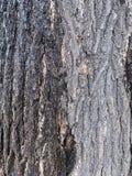El tronco de árbol viejo en el fondo del parque foto de archivo