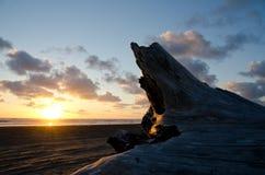 El tronco de la madera de deriva bajo luz de la puesta del sol en el océano apuntala Imagenes de archivo