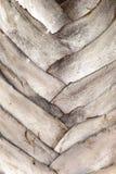 El tronco de la palma Foto de archivo