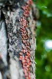 El tronco de un álamo viejo se convirtió en un camino para mil pequeños insectos El ejército el firebug va encima del tronco Foco foto de archivo