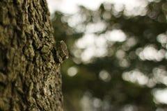 El tronco de un árbol Foto de archivo libre de regalías