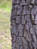 El tronco de un árbol viejo en un verde empañó el fondo Fotografía de archivo
