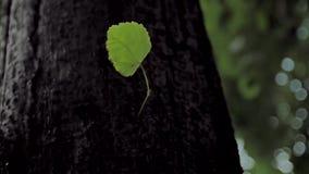 El tronco del árbol almacen de video