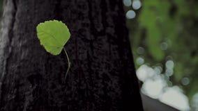 El tronco del árbol metrajes