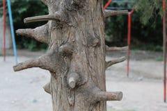 El tronco del árbol con las porciones de ramas podadas Imágenes de archivo libres de regalías