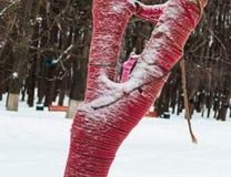 El tronco del árbol se adorna con el hilo rojo La decoración del árbol Cuerda de rosca roja fotografía de archivo