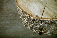 El tronco del abedul del corte en viejo fondo de madera Foco selectivo S Imagen de archivo libre de regalías
