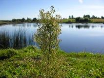 El tronco marchitado se coloca en hierba Imagen de archivo libre de regalías