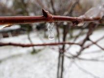 El tronco marrón debajo de gotas y de la nieve de lluvia Fotos de archivo libres de regalías
