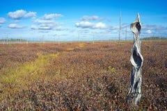 El tronco secado de un árbol en un pantano hermoso del otoño Imágenes de archivo libres de regalías