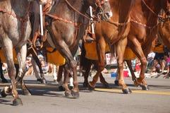 El trotar de los caballos foto de archivo