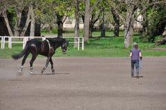 El truco con el caballo Imágenes de archivo libres de regalías
