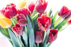 El tulipán de Colorfull florece las flores para el día de fiesta Foto de archivo libre de regalías