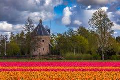 El tulipán hermoso coloca en Lisse en los Países Bajos Fotografía de archivo