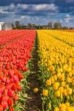 El tulipán hermoso coloca en Lisse en los Países Bajos Imágenes de archivo libres de regalías