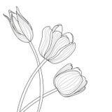 El tulipán hermoso florece la línea ejemplo Negro abstracto del vector libre illustration