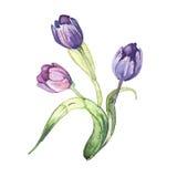 El tullip florece la acuarela de la pintura de la acuarela Foto de archivo
