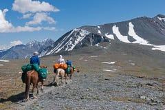 El turismo ecuestre en Altai es un fenómeno común Foto de archivo