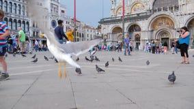 El turismo en Europa, muchacha alimenta pájaros en el cuadrado de las marcas del St cerca de catedral almacen de metraje de vídeo