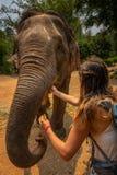 El turista de la muchacha alimenta plátanos al elefante tailandia imagen de archivo