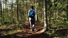 El turista de la mujer joven con la mochila está caminando en el bosque el día soleado Visión posterior almacen de metraje de vídeo