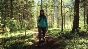 El turista de la mujer joven está caminando en el bosque el día soleado Front View metrajes