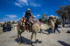 El turista de la mujer monta un camello Imagen de archivo
