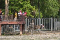El turista disfruta de una demostración del elefante en el parque zoológico de Taiping imagen de archivo libre de regalías