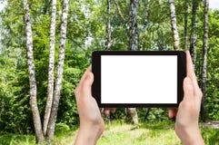 el turista fotografía árboles de abedul en parque en Moscú Fotos de archivo
