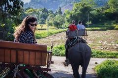 El turista viene visita y monta el elefante Foto de archivo libre de regalías