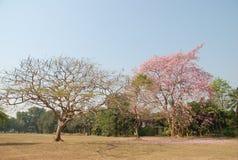 El twe dos muestra que la rama y muchas florecen Foto de archivo libre de regalías